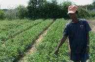 การปลูกพืชผักสวนครัวทนแล้ง