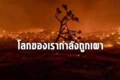 โลกกำลังถูกเผา ไฟป่าครั้งใหญ่ลุกลามหลายทวีป